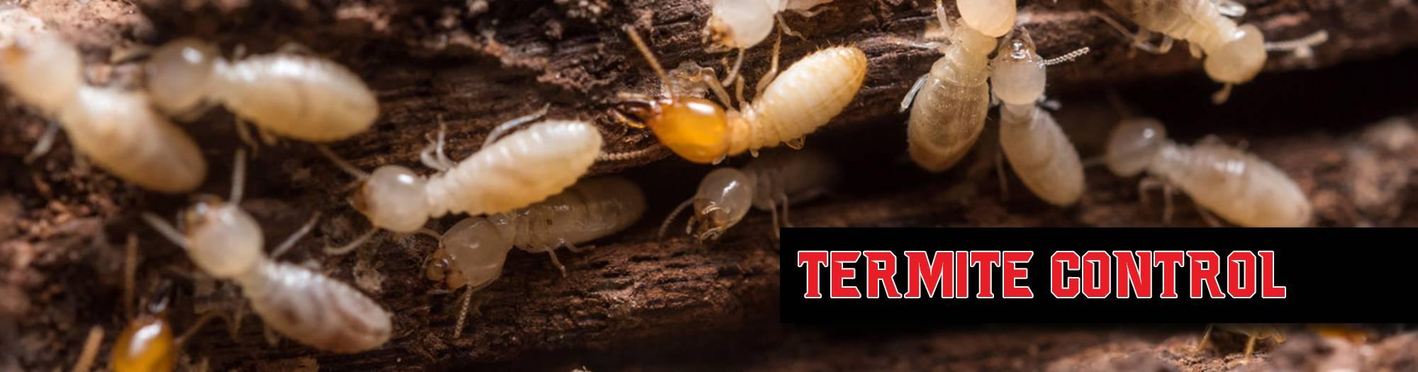Termite control Best Pest Control Casper WY
